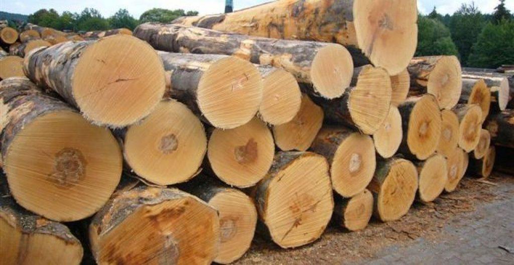 gỗ sồi và gỗ óc chó